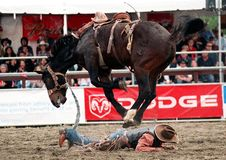 Rodeo Stockbilder