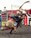 rodeo Obraz Royalty Free
