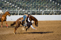 Rodeo Stock Photography