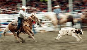 Rodeo 9 Stock Photography