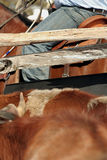 Rodeo abstract. Cropped view across a cattle pen with rodeo rider in the background Royalty Free Stock Image