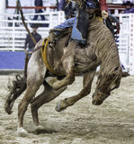 Rodeo akcja fotografia royalty free