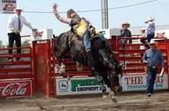 Rodeo: Bareback Berijdend Stock Afbeeldingen