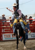 Rodeo: Bareback Riding Stock Photography