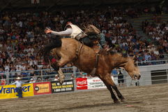 Rodeo: Bareback Riding Royalty Free Stock Images