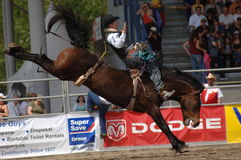 Rodeo: Bareback Riding Stock Image