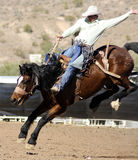 Rodeo Bucking Bronc Rider royalty free stock photography