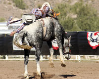 Rodeo Bucking Bronc Rider Stock Images