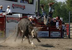 Rodeo: Bull Fighting Royalty Free Stock Photos