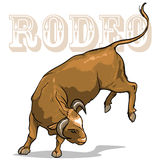 Rodeo Bull, Isolated Stock Images