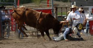Rodeo: Bull-Kämpfen Stockfotos