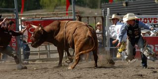 Rodeo: Bull-Kämpfen Lizenzfreie Stockfotografie