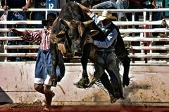 Rodeo Bull Ride Royalty Free Stock Photo