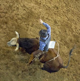 Rodeo bull rider cowboys. Rodeo bull rider competes the bull ride in national rodeo competition in Scottsdale, Arizona, rodeo Stock Photography