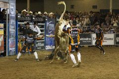 Rodeo bull rider cowboys Royalty Free Stock Images
