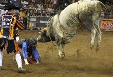 Rodeo bull rider cowboys Royalty Free Stock Photos