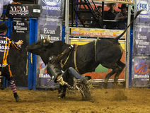 Rodeo bull rider cowboys Stock Images
