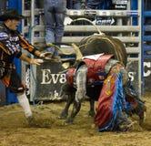 Rodeo bull rider cowboys Royalty Free Stock Image
