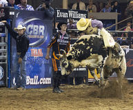 Rodeo bull rider cowboys Stock Photography