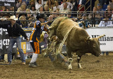 Rodeo bull rider cowboys Stock Image