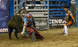Rodeo bull rider cowboys. Rodeo bull rider competes the bull ride in national rodeo competition in Scottsdale, Arizona, rodeo royalty free stock photography