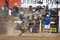 Rodeo - Bull Riding Royalty Free Stock Photos