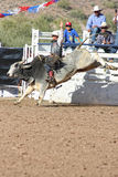 Rodeo Bull Riding Stock Photo