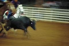 Rodeo bull roping Stock Image