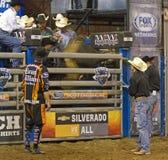 Rodeo byka jeźdza kowboje Obraz Royalty Free