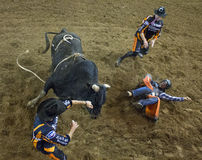 Rodeo byka jeźdza kowboje Obrazy Stock