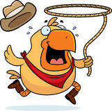 Rodeo Chicken. A cartoon rodeo chicken with a lasso Royalty Free Stock Images
