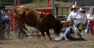Rodeo: Combattimento di Bull Fotografie Stock