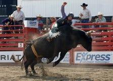 Rodeo: Combattimento di Bull Fotografie Stock Libere da Diritti