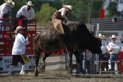 Rodeo: Combattimento di Bull Immagine Stock Libera da Diritti