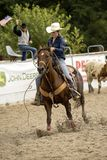 Rodeo competition in ranch roping Royalty Free Stock Image
