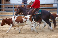 Rodeo competition is about to begin Stock Images
