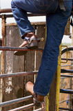 Rodeo competitor. Detail of Rodeo competitor standing on fencing watching the action Royalty Free Stock Images