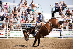 Rodeo Cowboy. A saddle bronc rider at a local rodeo. Herbert Rodeo 2007 royalty free stock image