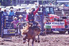 Rodeo Cowboy. Annual Country Rodeo Festival in Quebec, Canada Stock Photos