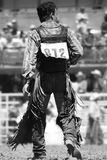 Rodeo Cowboy (BW). A Rodeo Cowboy walks back to the chutes after a successful ride (shallow focus, black and white royalty free stock images