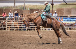 Rodeo Cowboy in Cottonwood Royalty Free Stock Photo