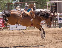Rodeo Cowboy Losing his Ride Stock Image