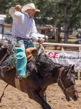 Rodeo Cowboy Stock Images