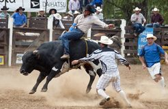 Rodeo - Cowboy riding a bull Royalty Free Stock Images