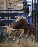 Rodeo Cowboy riding a bull Stock Photography