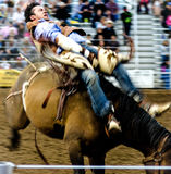 Rodeo Cowboy. A cowboy riding a horse during a rodeo competition Stock Photography