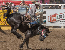 Rodeo Cowboy on A rough Ride Royalty Free Stock Photos
