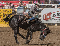 Rodeo Cowboy on A rough Ride. A rodeo cowboy tossed around by his horse during a rodeo in Red Bluff, California on April 19, 2015 Stock Photo