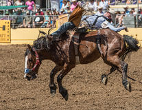 Rodeo Cowboy on A rough Ride Stock Images