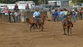 Rodeo Cowboys - Bulldogging Steer Wrestling in Slow Motion - Clip 8 of 9 stock video